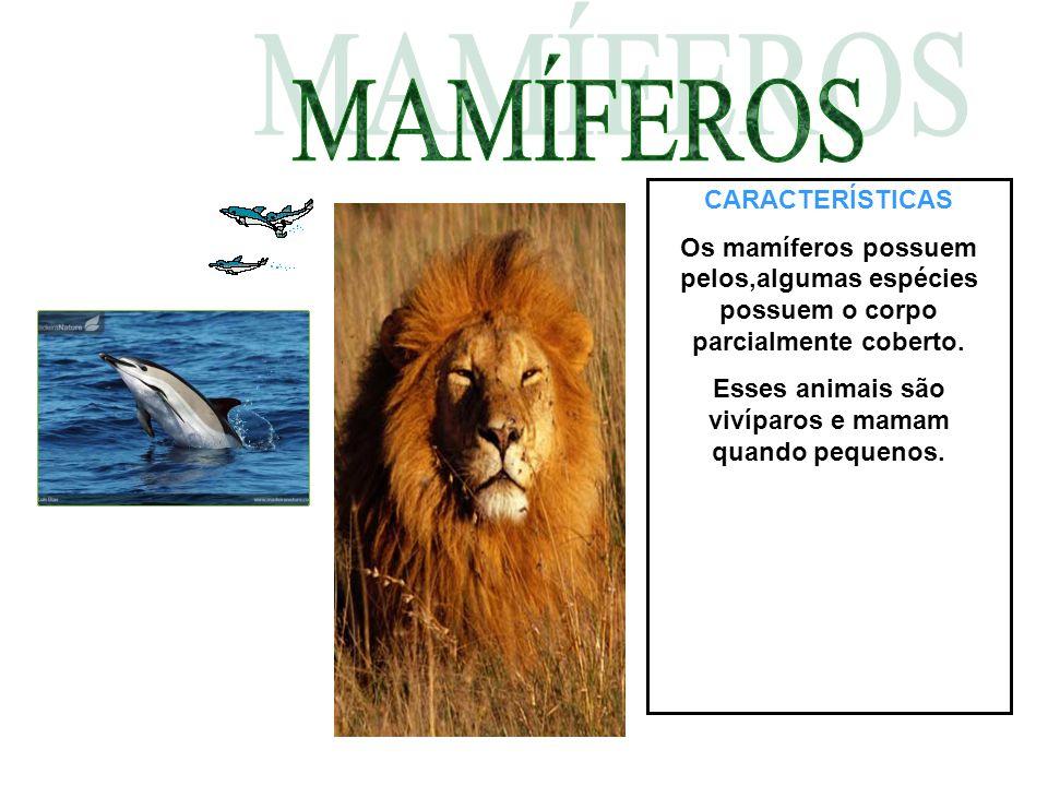 CARACTERÍSTICAS Os mamíferos possuem pelos,algumas espécies possuem o corpo parcialmente coberto. Esses animais são vivíparos e mamam quando pequenos.