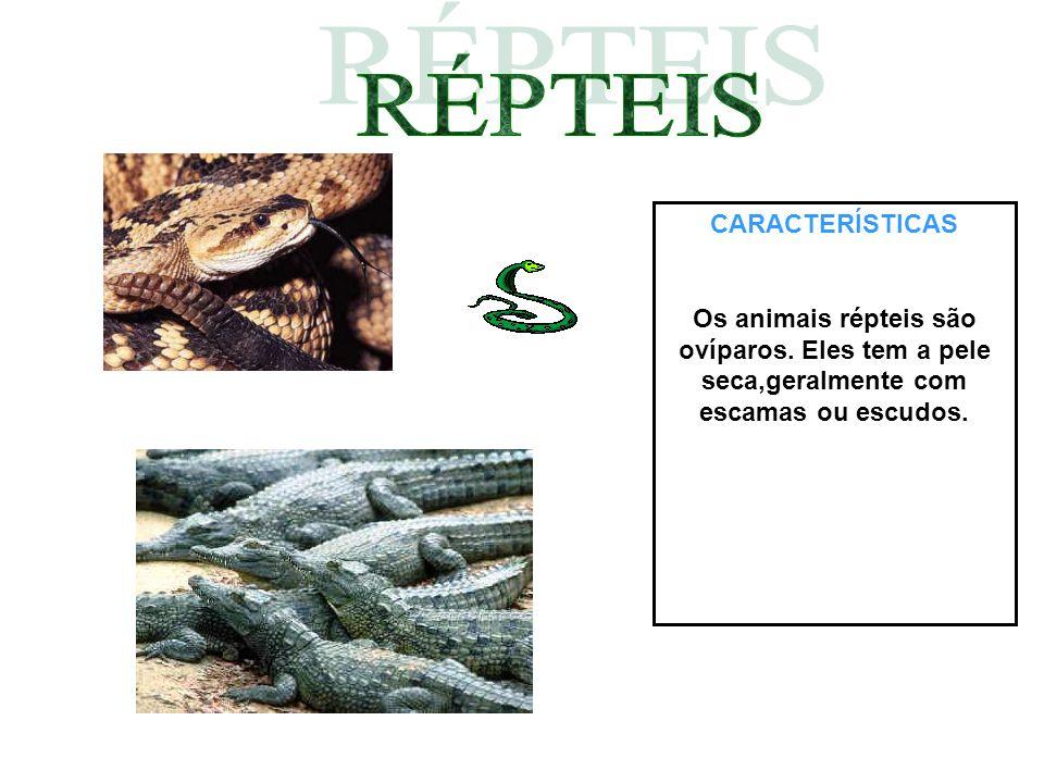 CARACTERÍSTICAS Os animais répteis são ovíparos. Eles tem a pele seca,geralmente com escamas ou escudos.