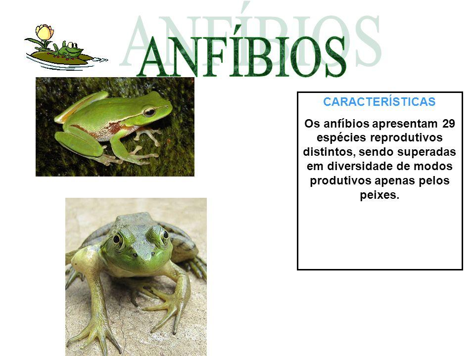 CARACTERÍSTICAS Os anfíbios apresentam 29 espécies reprodutivos distintos, sendo superadas em diversidade de modos produtivos apenas pelos peixes.