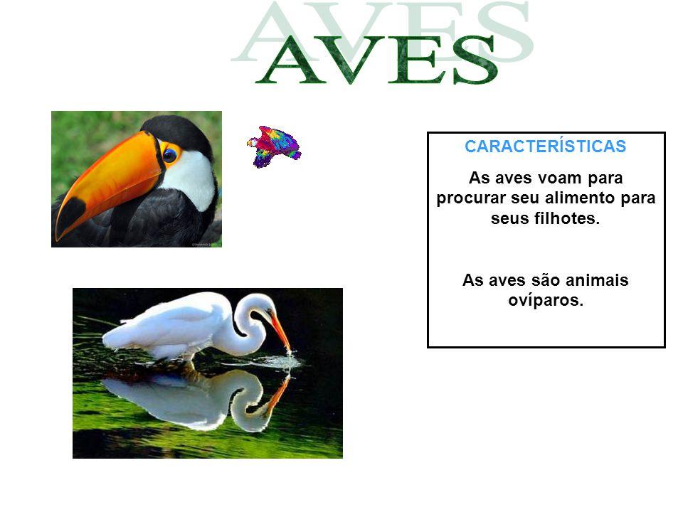 CARACTERÍSTICAS As aves voam para procurar seu alimento para seus filhotes. As aves são animais ovíparos.