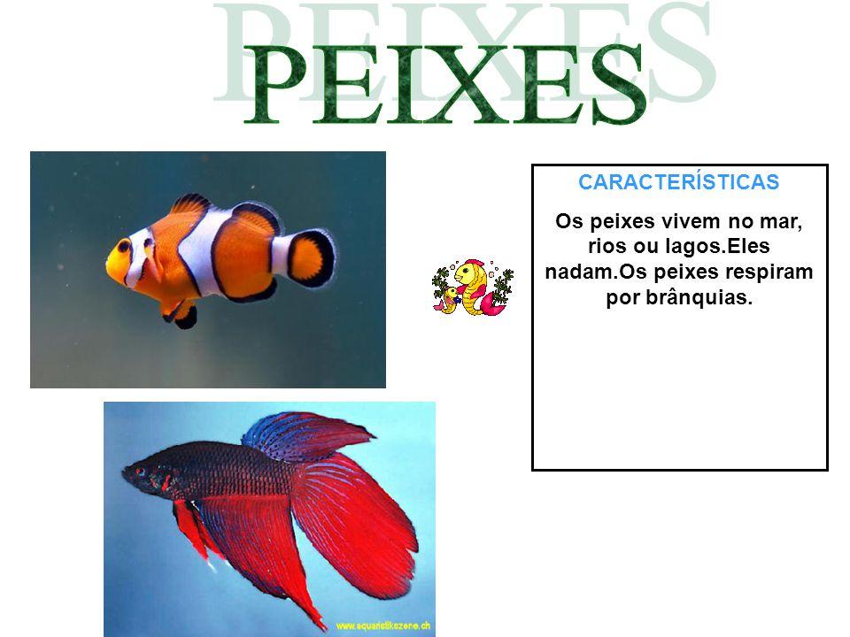 CARACTERÍSTICAS Os peixes vivem no mar, rios ou lagos.Eles nadam.Os peixes respiram por brânquias.