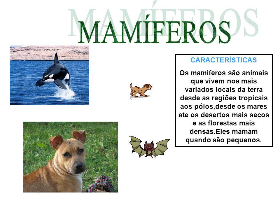 CARACTERÍSTICAS Os mamíferos são animais que vivem nos mais variados locais da terra desde as regiões tropicais aos pólos,desde os mares ate os desert