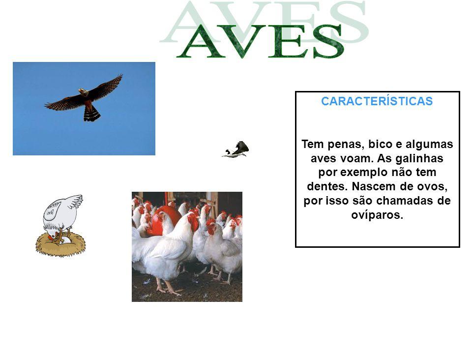 CARACTERÍSTICAS Tem penas, bico e algumas aves voam. As galinhas por exemplo não tem dentes. Nascem de ovos, por isso são chamadas de ovíparos.