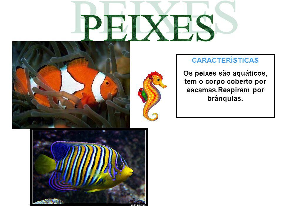 CARACTERÍSTICAS Os peixes são aquáticos, tem o corpo coberto por escamas.Respiram por brânquias.