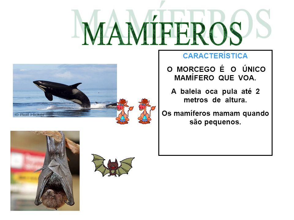 CARACTERÍSTICA O MORCEGO É O ÚNICO MAMÍFERO QUE VOA. A baleia oca pula até 2 metros de altura. Os mamíferos mamam quando são pequenos.