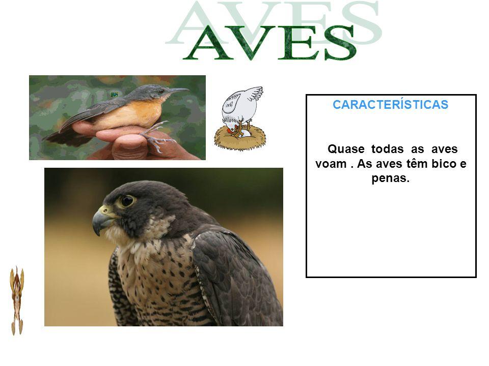 CARACTERÍSTICAS Quase todas as aves voam. As aves têm bico e penas.