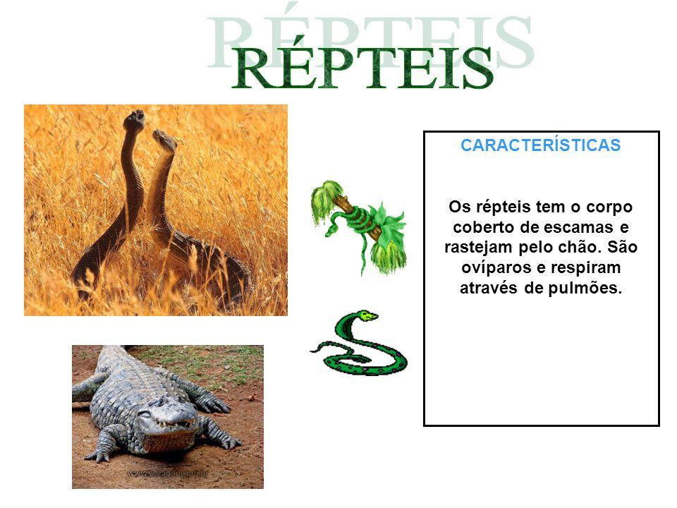 CARACTERÍSTICAS Os répteis tem o corpo coberto de escamas e rastejam pelo chão. São ovíparos e respiram através de pulmões.