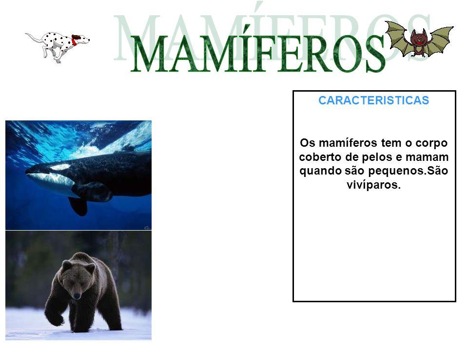 CARACTERISTICAS Os mamíferos tem o corpo coberto de pelos e mamam quando são pequenos.São vivíparos.