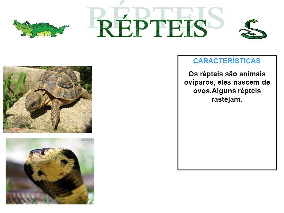 CARACTERÍSTICAS Os répteis são animais ovíparos, eles nascem de ovos.Alguns répteis rastejam.