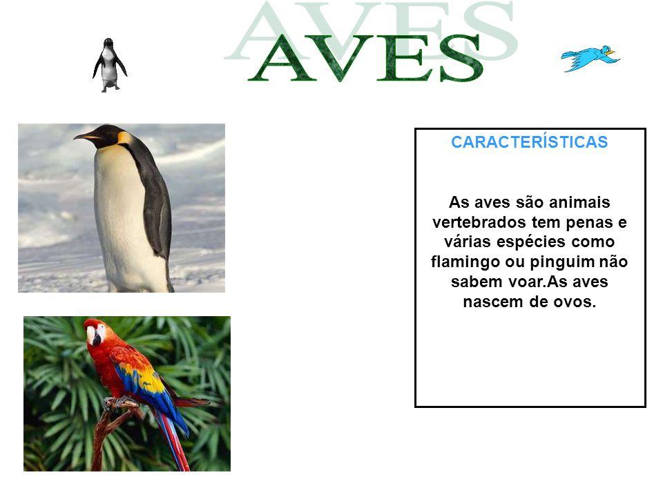 CARACTERÍSTICAS As aves são animais vertebrados tem penas e várias espécies como flamingo ou pinguim não sabem voar.As aves nascem de ovos.