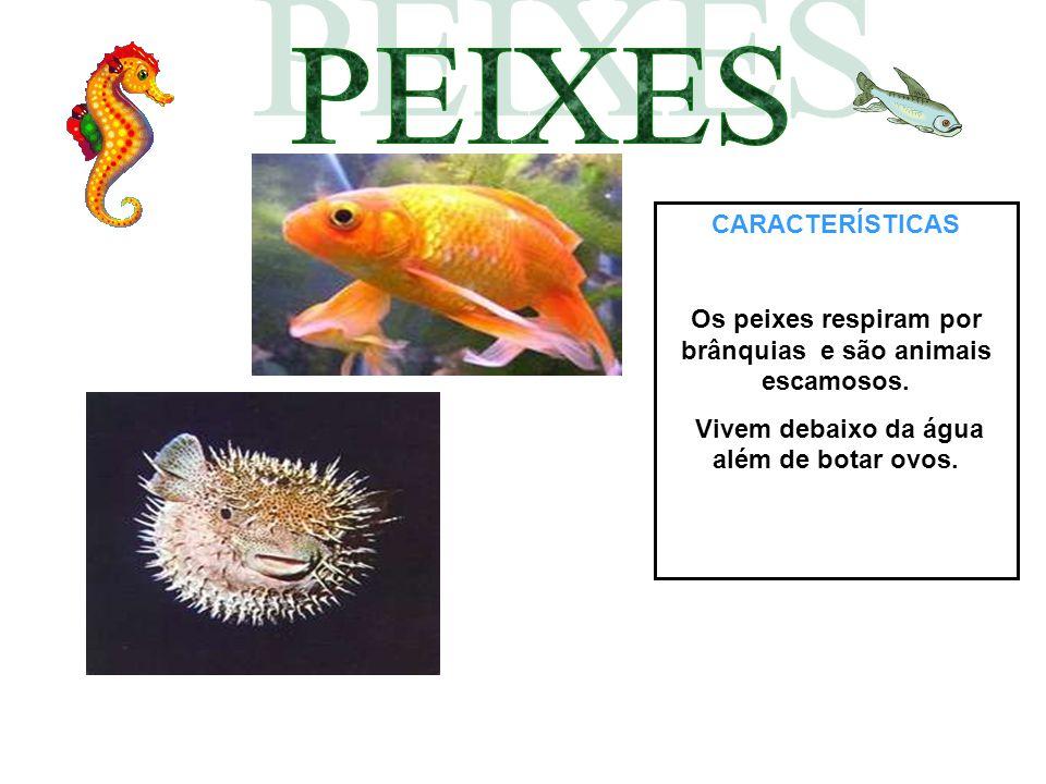 CARACTERÍSTICAS Os peixes respiram por brânquias e são animais escamosos. Vivem debaixo da água além de botar ovos.