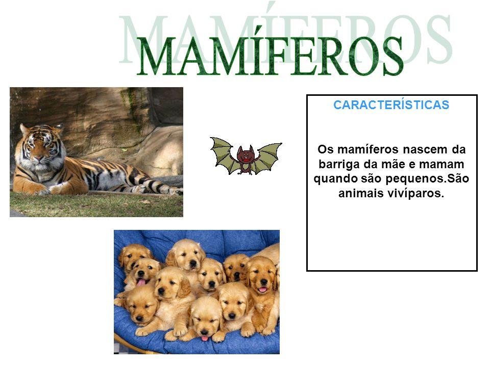 CARACTERÍSTICAS Os mamíferos nascem da barriga da mãe e mamam quando são pequenos.São animais vivíparos.