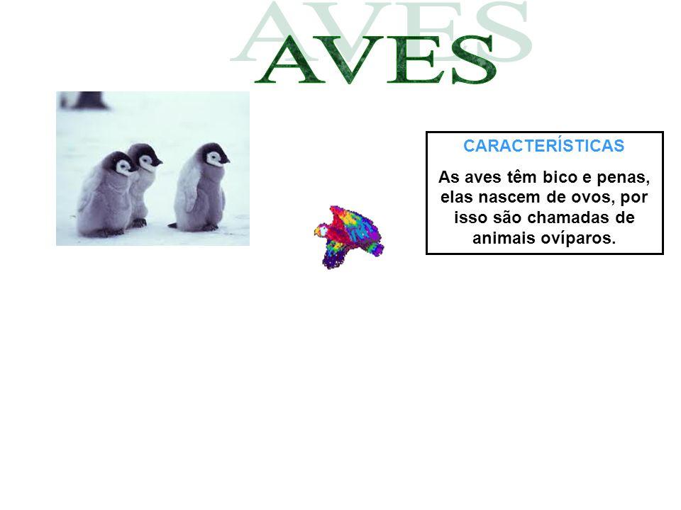 CARACTERÍSTICAS As aves têm bico e penas, elas nascem de ovos, por isso são chamadas de animais ovíparos.