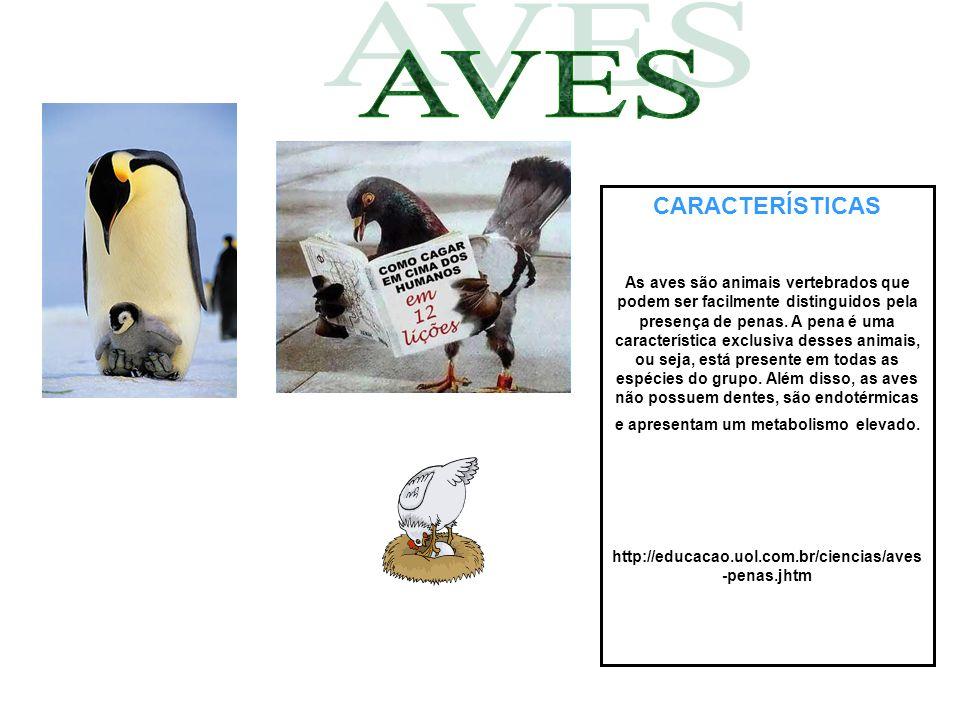 CARACTERÍSTICAS As aves são animais vertebrados que podem ser facilmente distinguidos pela presença de penas. A pena é uma característica exclusiva de