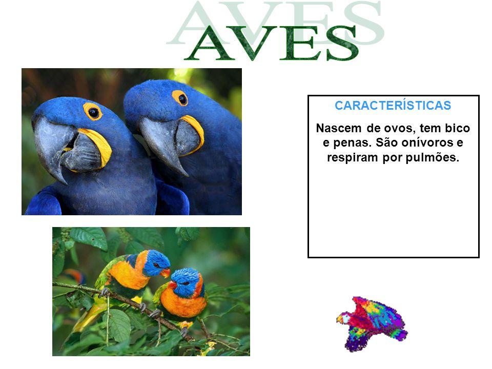 CARACTERÍSTICAS Nascem de ovos, tem bico e penas. São onívoros e respiram por pulmões.
