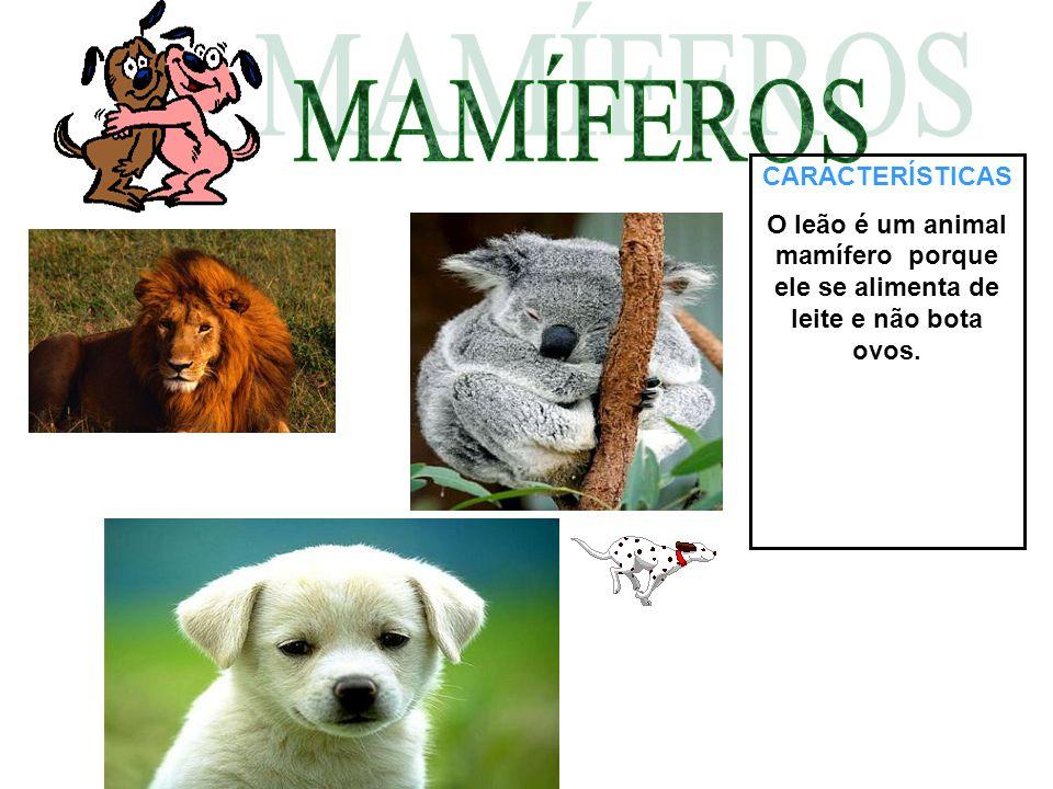 CARACTERÍSTICAS O leão é um animal mamífero porque ele se alimenta de leite e não bota ovos.
