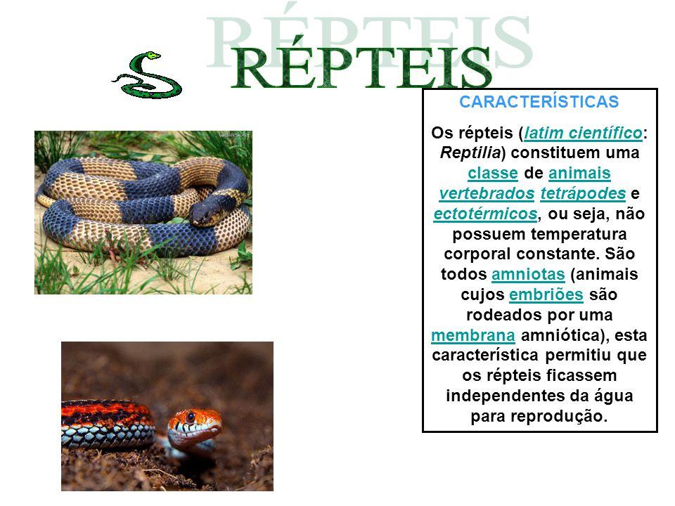 CARACTERÍSTICAS Os répteis (latim científico: Reptilia) constituem uma classe de animais vertebrados tetrápodes e ectotérmicos, ou seja, não possuem t