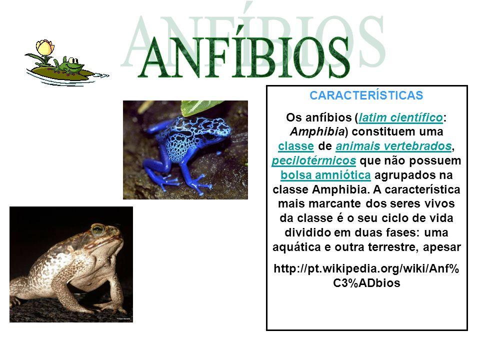 CARACTERÍSTICAS Os anfíbios (latim científico: Amphibia) constituem uma classe de animais vertebrados, pecilotérmicos que não possuem bolsa amniótica