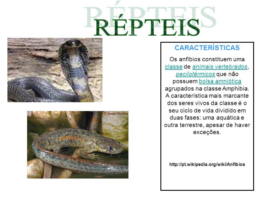 CARACTERÍSTICAS Os anfíbios constituem uma classe de animais vertebrados, pecilotérmicos que não possuem bolsa amniótica agrupados na classe Amphibia.