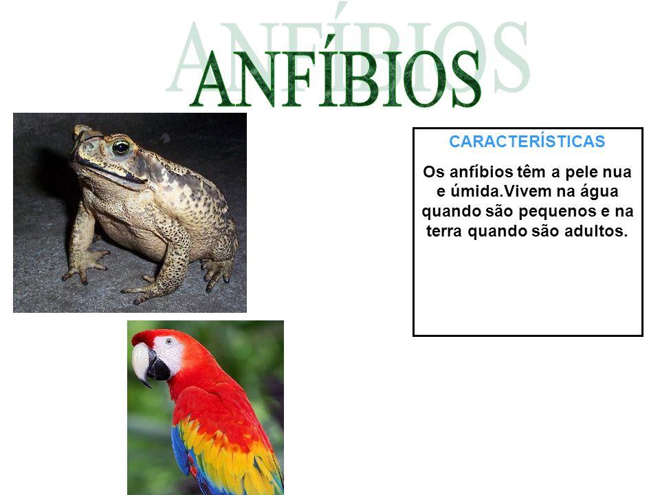 CARACTERÍSTICAS Os anfíbios têm a pele nua e úmida.Vivem na água quando são pequenos e na terra quando são adultos.