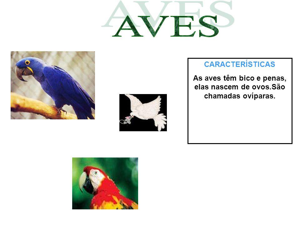 CARACTERÍSTICAS As aves têm bico e penas, elas nascem de ovos.São chamadas ovíparas.