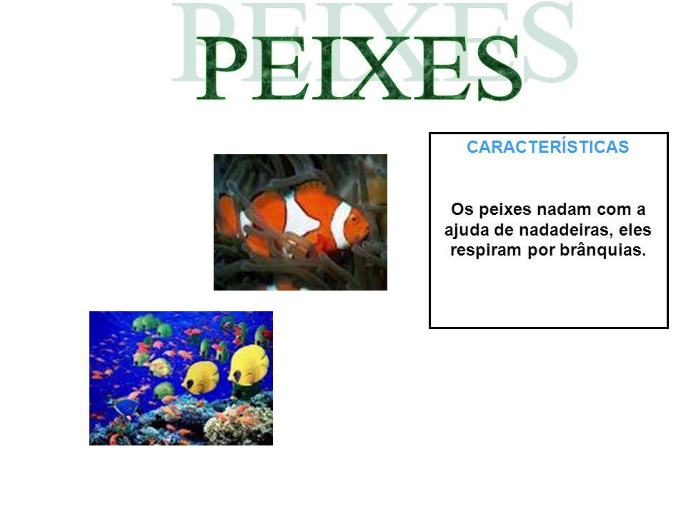 CARACTERÍSTICAS Os peixes nadam com a ajuda de nadadeiras, eles respiram por brânquias.