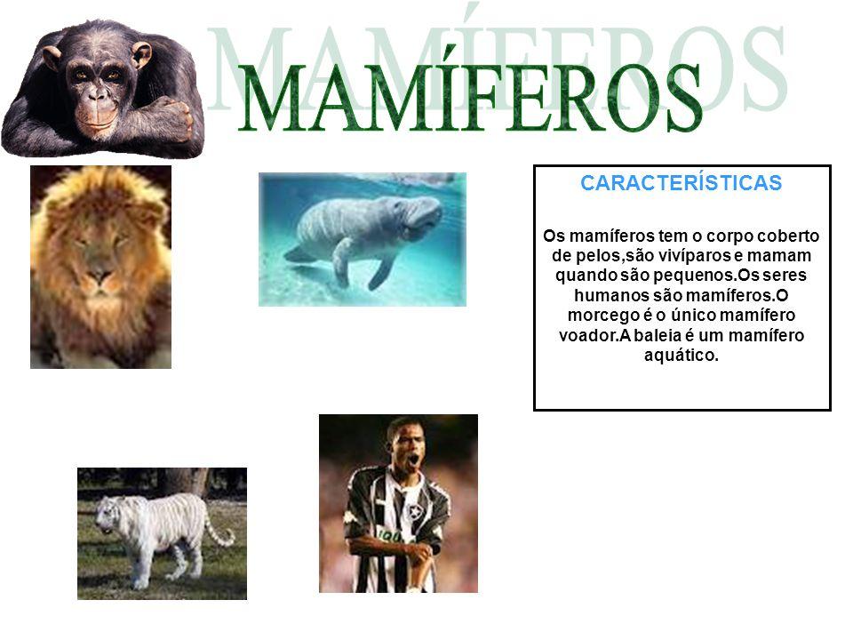 CARACTERÍSTICAS Os mamíferos tem o corpo coberto de pelos,são vivíparos e mamam quando são pequenos.Os seres humanos são mamíferos.O morcego é o único