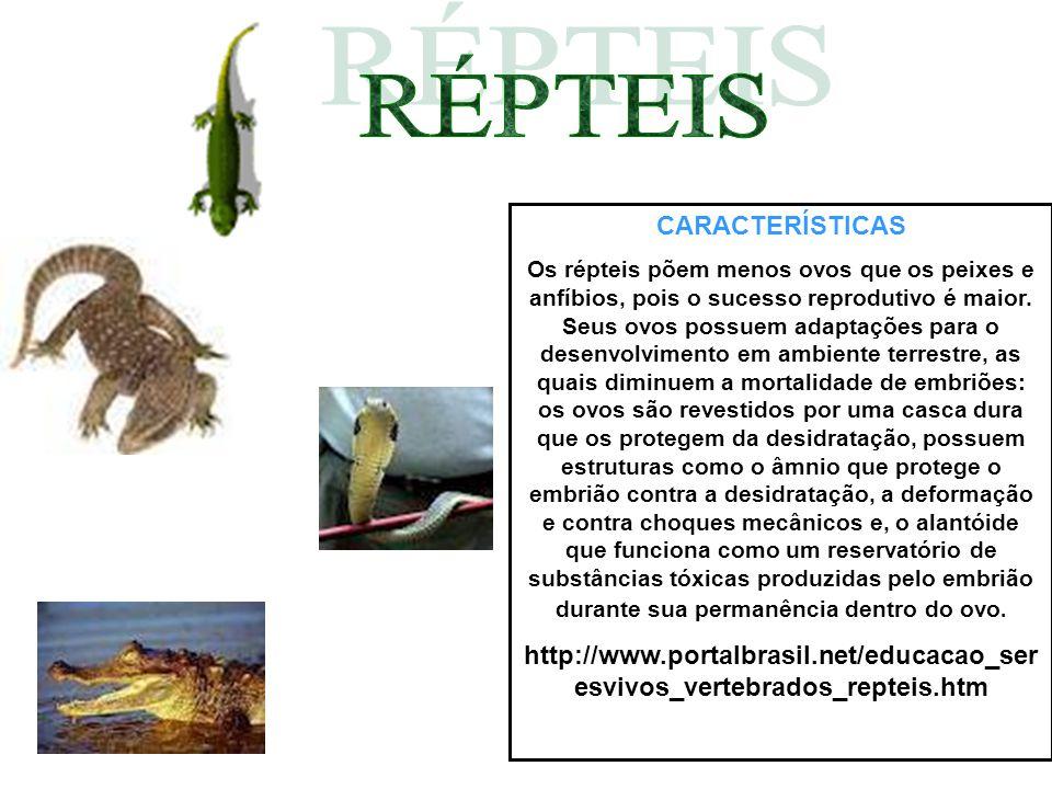 CARACTERÍSTICAS Os répteis põem menos ovos que os peixes e anfíbios, pois o sucesso reprodutivo é maior. Seus ovos possuem adaptações para o desenvolv