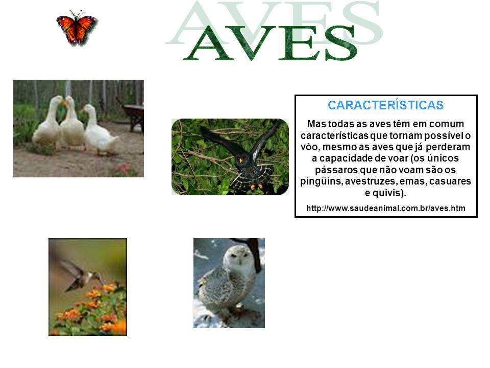 CARACTERÍSTICAS Mas todas as aves têm em comum características que tornam possível o vôo, mesmo as aves que já perderam a capacidade de voar (os único