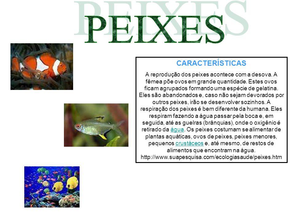 CARACTERÍSTICAS A reprodução dos peixes acontece com a desova. A fêmea põe ovos em grande quantidade. Estes ovos ficam agrupados formando uma espécie