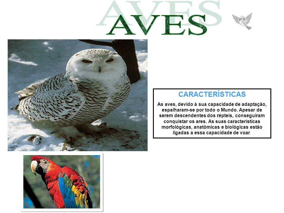 CARACTERÍSTICAS As aves, devido à sua capacidade de adaptação, espalharam-se por todo o Mundo. Apesar de serem descendentes dos répteis, conseguiram c