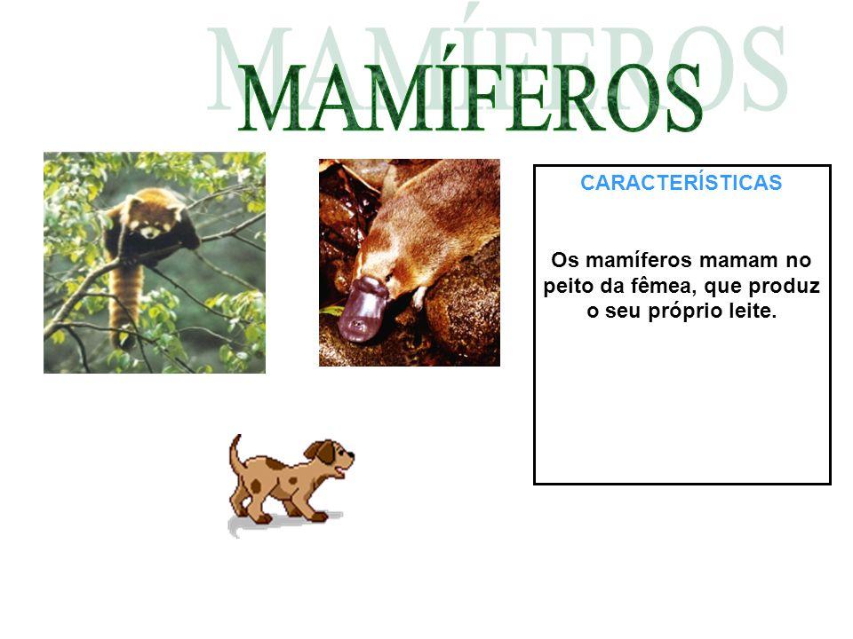 CARACTERÍSTICAS Os mamíferos mamam no peito da fêmea, que produz o seu próprio leite.