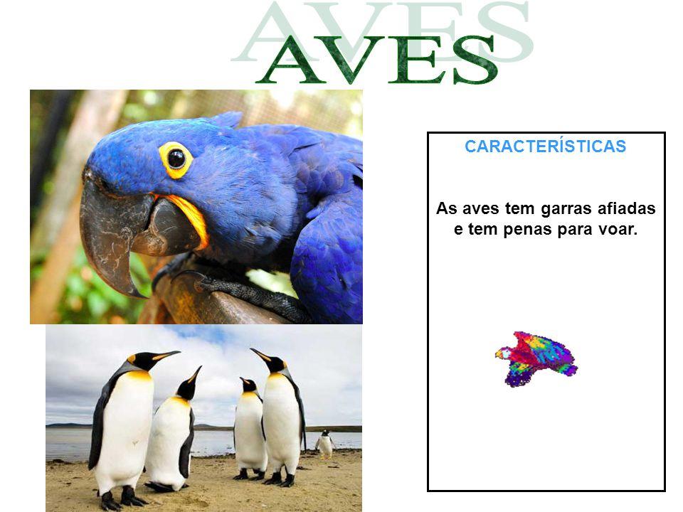 CARACTERÍSTICAS As aves tem garras afiadas e tem penas para voar.