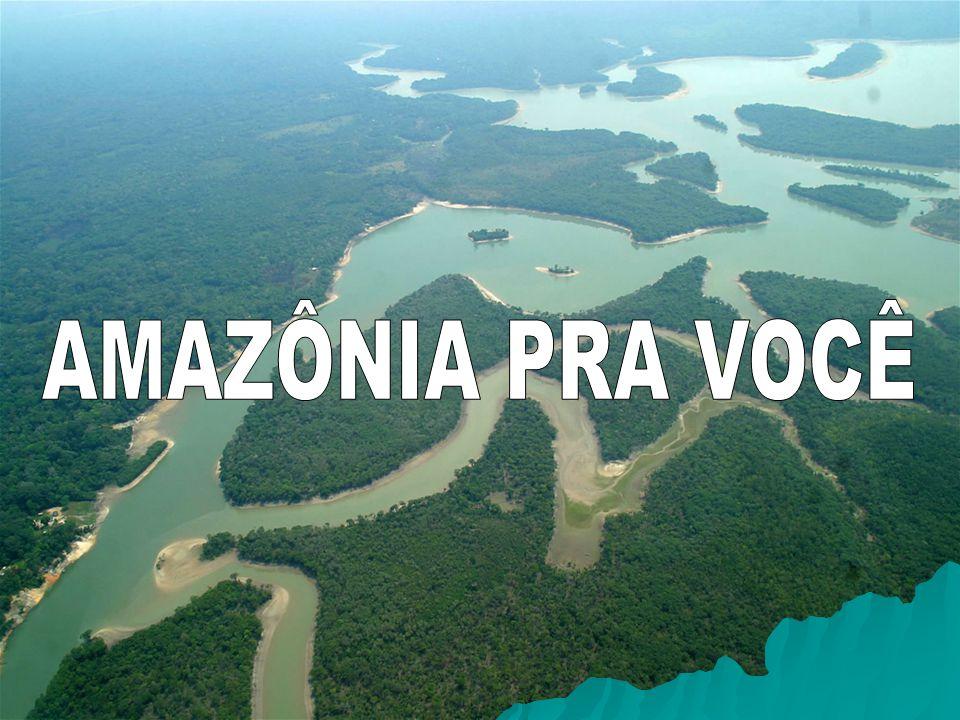 AMAZÔNIA: O ÍNICIO DE TUDO..SERÁ QUE VALE A PENA TROCARMOS O NOSSO VERDE POR DÓLARES.