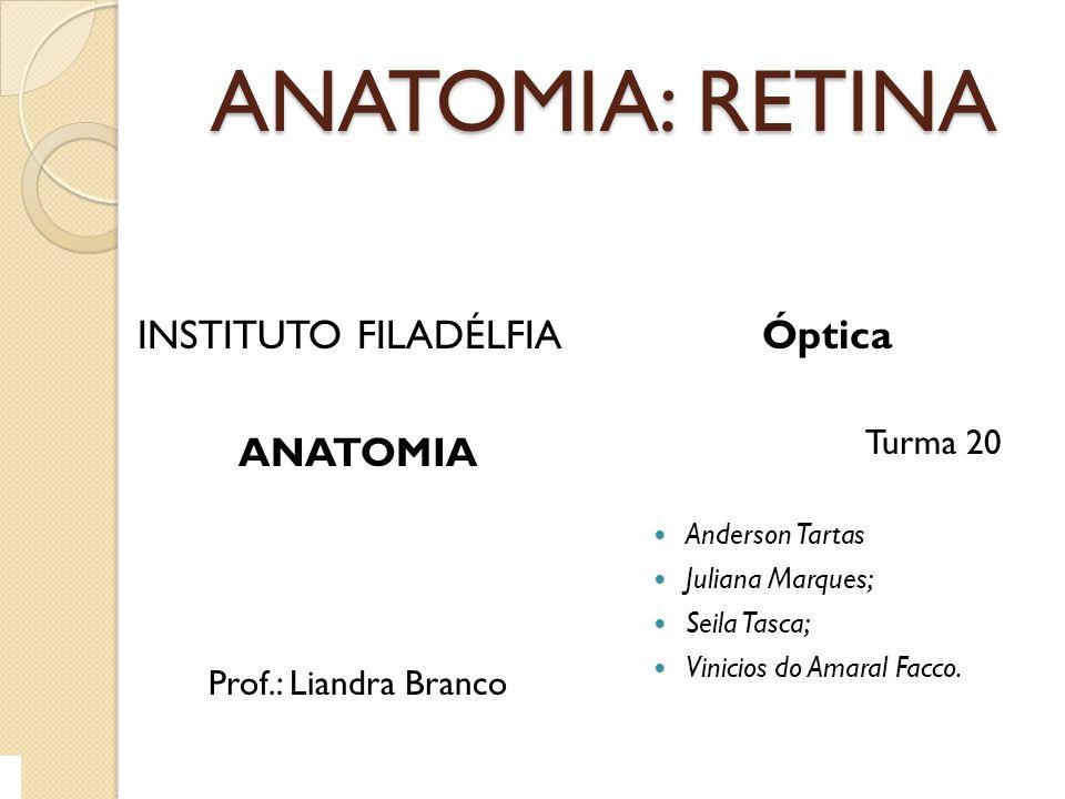 TÚNICA NERVOSA A Túnica nervosa ou Túnica interna é constituída pela retina; Está sobre a coróide, estende-se do ponto da implantação do nervo óptico no olho até as margens do orifício pupilar; É irrigada pela artéria central da retina, que se ramifica posteriormente.o retorno da circulação se faz pelas vênulas, desemboca em veias maiores até formar a veia central