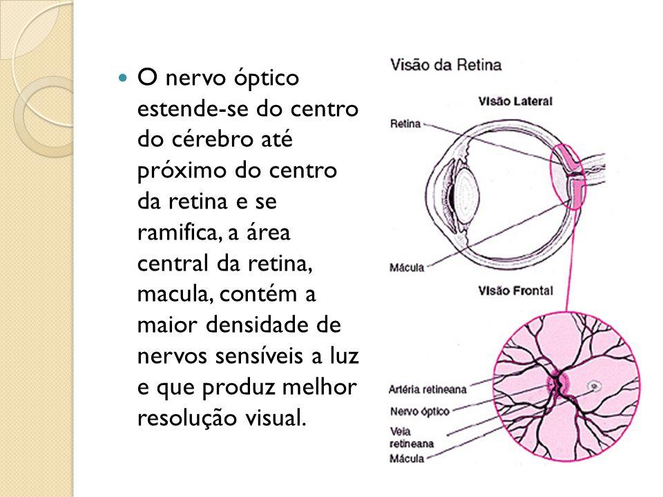 Desempenha importante função na visão, onde se encontram as células conhecidas como fotoreceptoras, e que recebem a imagem que será levada ao cérbro para nos dar a sensação da visão.