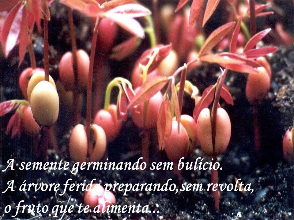 A semente germinando sem bulício. A árvore ferida preparando,sem revolta, o fruto que te alimenta...
