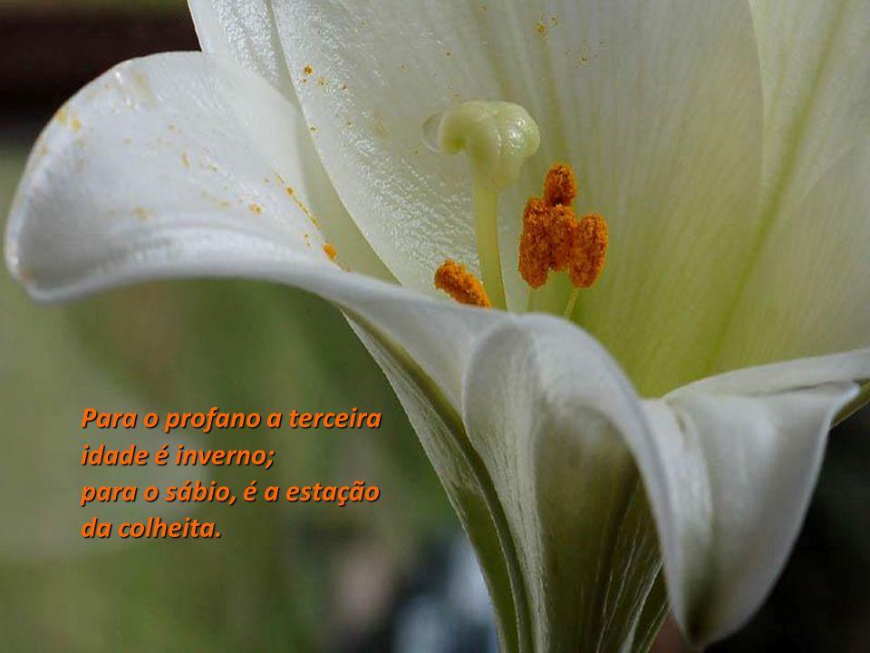 Quando envelhecemos a beleza se converte em qualidade interior. Ralph Waldo Emerson. Clérigo (1803 – 1882) Clérigo (1803 – 1882)