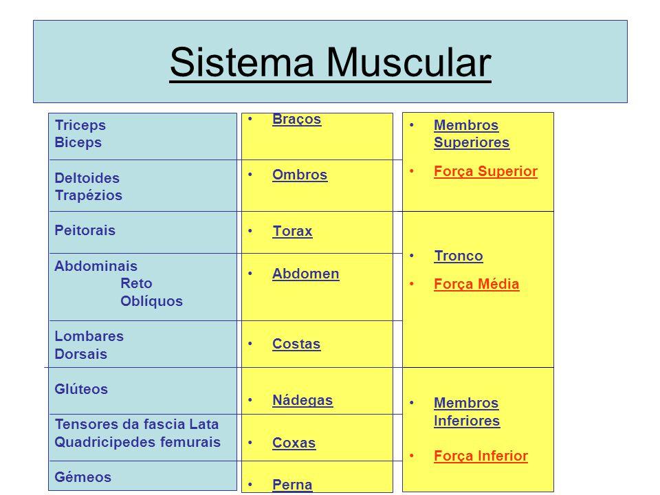 Sistema Muscular Braços Ombros Torax Abdomen Costas Nádegas Coxas Perna Triceps Biceps Deltoides Trapézios Peitorais Abdominais Reto Oblíquos Lombares Dorsais Glúteos Tensores da fascia Lata Quadricipedes femurais Gémeos Membros Superiores Força Superior Tronco Força Média Membros Inferiores Força Inferior