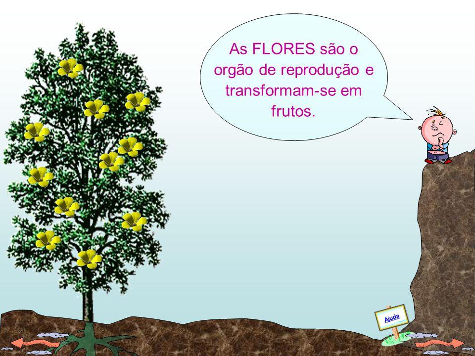 As árvores também dão FLORES. FLORES