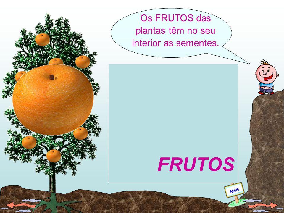 As FLORES são o orgão de reprodução e transformam-se em frutos. Ajuda