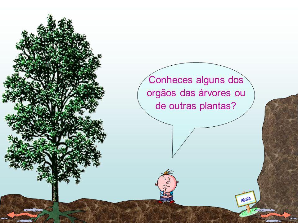As árvores adultas têm orgãos que realizam várias funções. Ajuda
