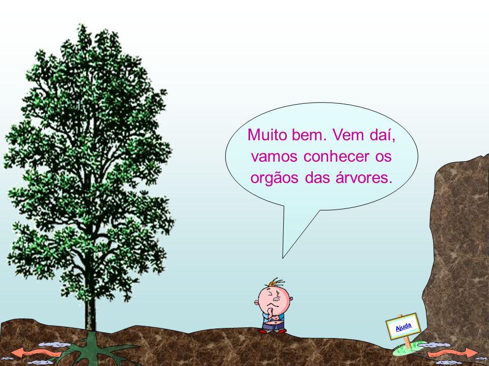 Conheces alguns dos orgãos das árvores ou de outras plantas?