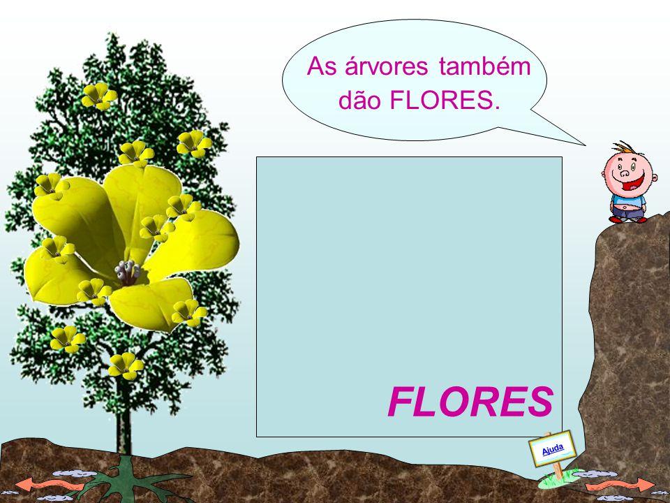 As FOLHAS são o laboratório químico das plantas verdes. FOLHAS