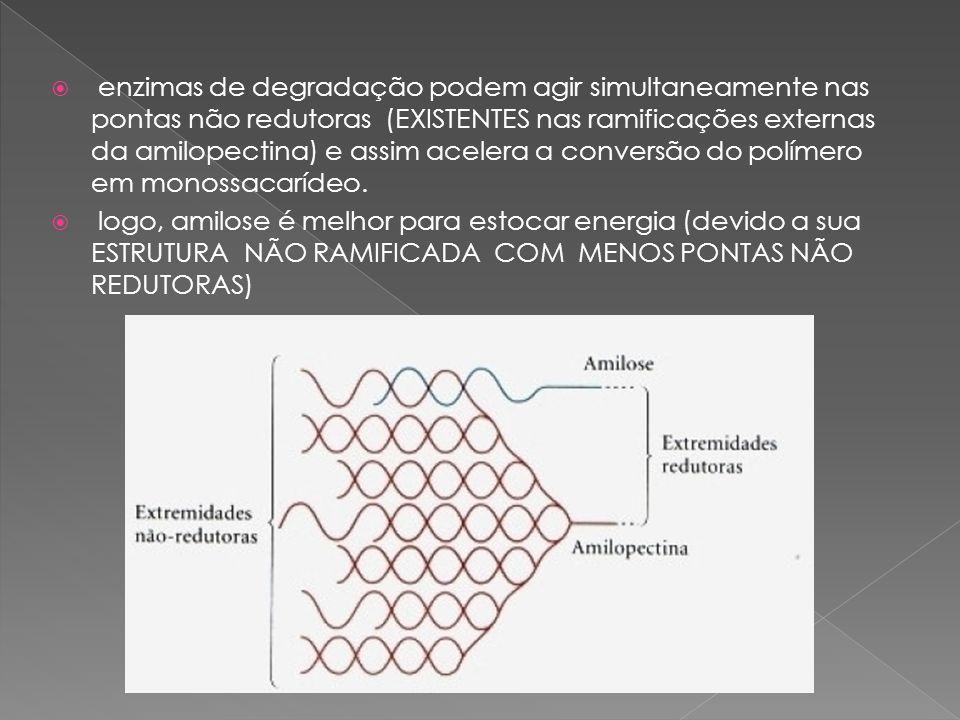 enzimas de degradação podem agir simultaneamente nas pontas não redutoras (EXISTENTES nas ramificações externas da amilopectina) e assim acelera a con