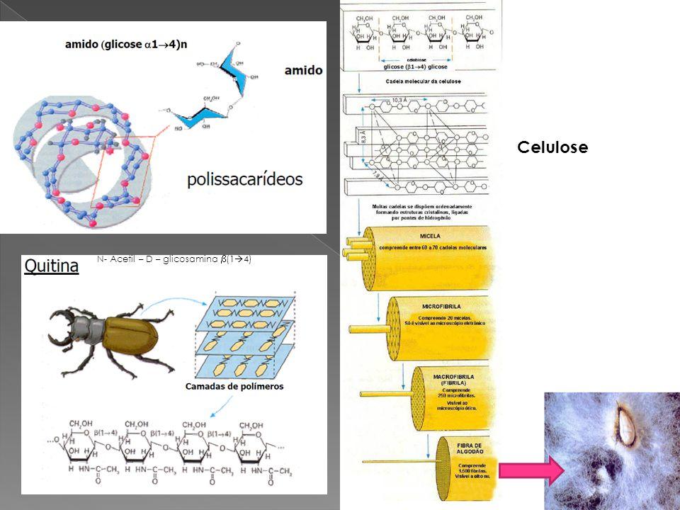Celulose N- Acetil – D – glicosamina (1 4)