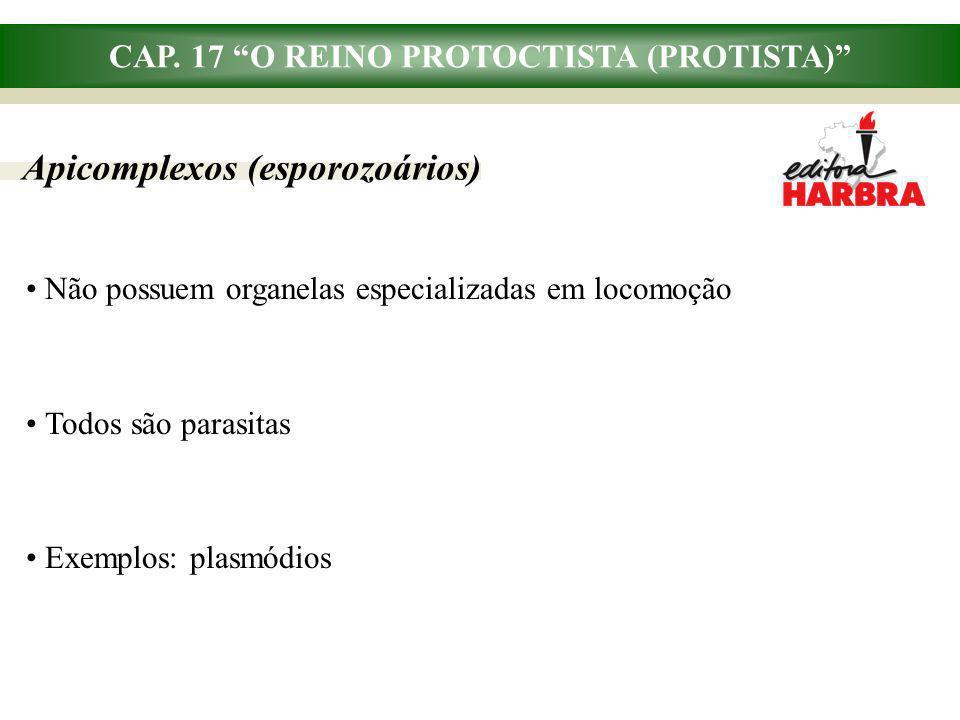 CAP. 17 O REINO PROTOCTISTA (PROTISTA) Apicomplexos (esporozoários) Não possuem organelas especializadas em locomoção Todos são parasitas Exemplos: pl