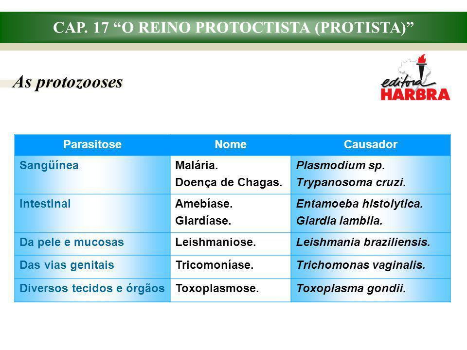 CAP. 17 O REINO PROTOCTISTA (PROTISTA) As protozooses ParasitoseNomeCausador SangüíneaMalária. Doença de Chagas. Plasmodium sp. Trypanosoma cruzi. Int