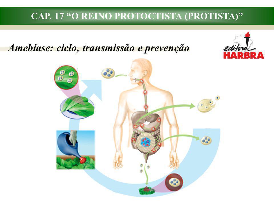 CAP. 17 O REINO PROTOCTISTA (PROTISTA) Amebíase: ciclo, transmissão e prevenção