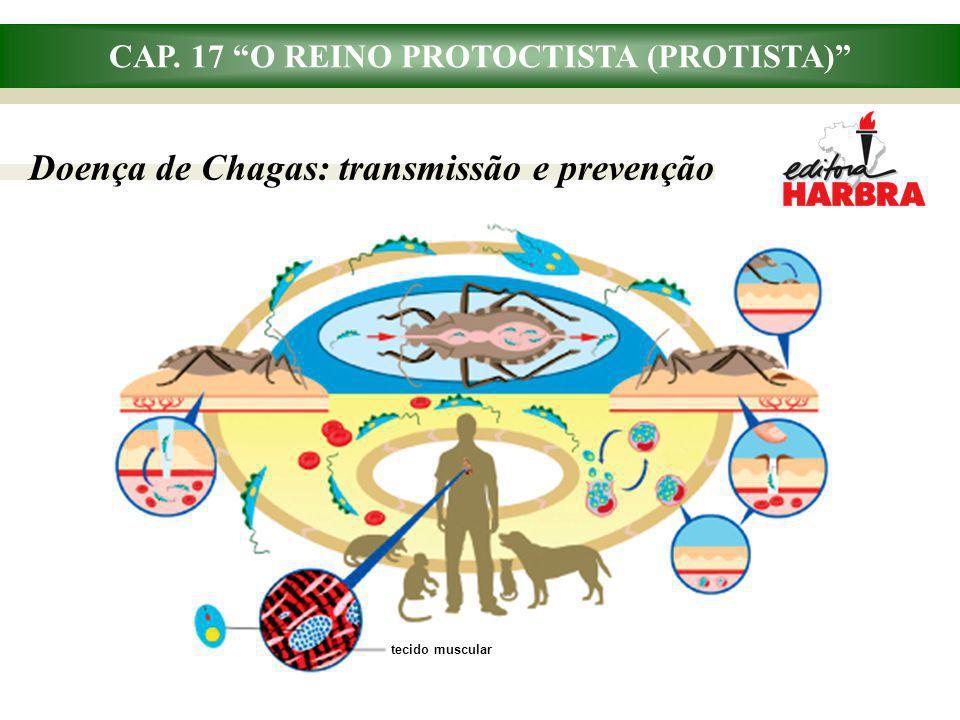 CAP. 17 O REINO PROTOCTISTA (PROTISTA) Doença de Chagas: transmissão e prevenção tecido muscular